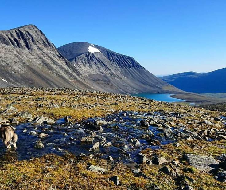 """I never get tired of exloring new corners of my """"backyard"""". This summer I found this small lake with a big reindeer herd standing on the glacier above to cook off."""