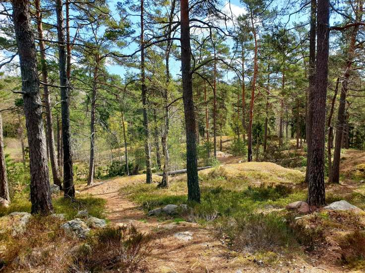 This is my home arena for running trails, just outside Stockholm.